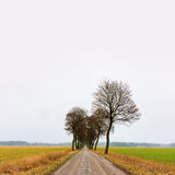 Avenue of bare trees in autumn Royalty Free Stock Photos