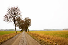 Avenue with bare trees Royalty Free Stock Photos