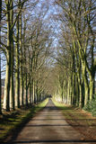An avenue of beeches in the autumn. Tree shadows fall across a long beech avenue as it dwindles into the distance Royalty Free Stock Images