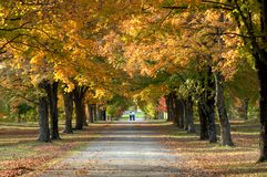 Avenue beneath the trees Stock Photos