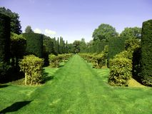 Avenue of Box and Hornbeam Topiary Royalty Free Stock Images