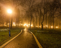 The avenue of city park at night Stock Photos