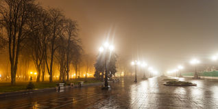 The avenue of city park Stock Image