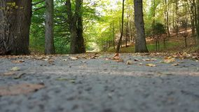 Avenue covered with leaves in an autumn forest. Stock Image