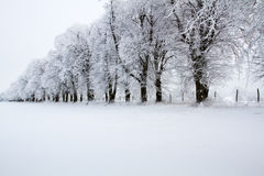 Avenue covered with snow Stock Photography