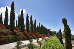 Avenue of cypresses. Direct avenue of cypresses in fine park in Israel Royalty Free Stock Photography