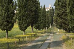 Avenue of cypresses Stock Image