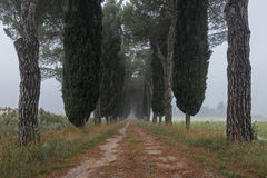 Avenue of cypresses, Tuscany , Italy Royalty Free Stock Photography