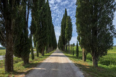 Avenue of cypresses Tuscany  Italy Stock Image