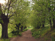 Avenue délimitée par des arbres Photos libres de droits