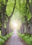 Avenue d'arbre avec mystiquement léger à l'extrémité photo stock
