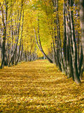 Avenue d'automne Photo stock