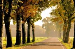 Avenue dans l'automne Images libres de droits