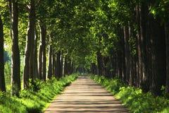 Avenue de coucher du soleil Image libre de droits