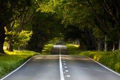 Avenue de hêtre Images libres de droits