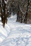 Avenue de l'hiver image libre de droits