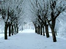 Avenue de l'hiver Photographie stock libre de droits