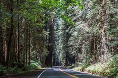 Avenue de la route de Giants Photos stock