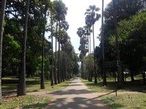 Avenue de palmier royal dans le jardin botanique - Peradeniya photo libre de droits