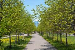 Avenue de pied au printemps Photographie stock libre de droits