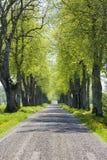 Avenue de route de campagne images libres de droits