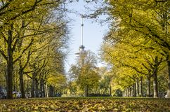 Avenue de tilleul en automne photo stock
