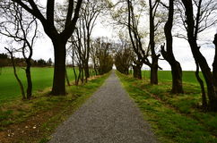 Avenue of deciduous trees. In spring Stock Photo