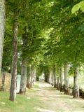 Avenue des arbres Image libre de droits