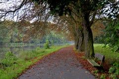 Avenue des arbres Photo libre de droits