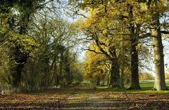 Avenue des arbres de chêne et de cendre en défunt automne Photo libre de droits