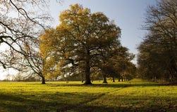 Avenue des arbres de chêne et de cendre en défunt automne Photos libres de droits