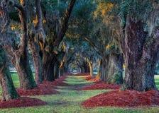 Avenue des chênes photo libre de droits