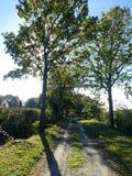 Avenue des chênes, colline de Bunwell, Norfolk, Angleterre photographie stock libre de droits