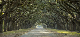 Avenue des chênes dans des sud américains photo libre de droits
