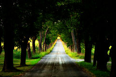 Avenue with dirt road Royalty Free Stock Images