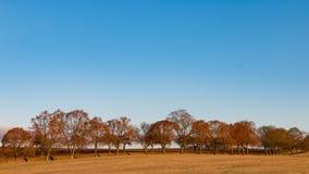 Avenue en automne en retard Photo libre de droits