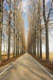 Avenue en hiver Images stock