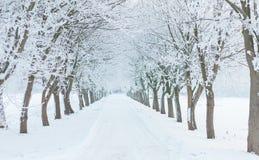 Avenue en hiver avec la neige et les arbres couverts de la glace Image libre de droits