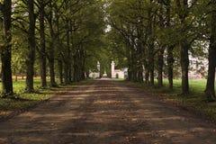 Avenue encadrée par arbre image stock