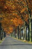 Avenue in fall Stock Photo
