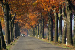 Avenue in fall Royalty Free Stock Images