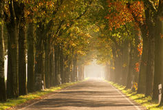 Avenue in fall Royalty Free Stock Photography