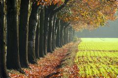 Avenue in fall Stock Images