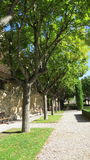 Avenue feuillue dans des Frances de Gordes Luberon Photo stock