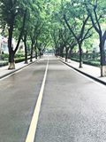The  avenue of ficus virens. A beautiful and straight Avenue of ficus virens Royalty Free Stock Photography