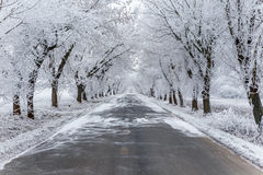 An avenue with ice covered trees. Royalty Free Stock Images