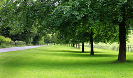 An Avenue of Lime Trees in an English Garden Royalty Free Stock Images