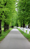 Avenue of lime trees Royalty Free Stock Photo