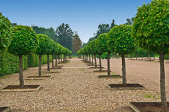 Avenue of lindens  in palace formal garden Royalty Free Stock Photos