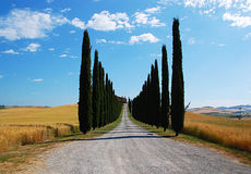 Avenue lined with cypress. Cypress-lined avenue that leads to a cottage Stock Photo